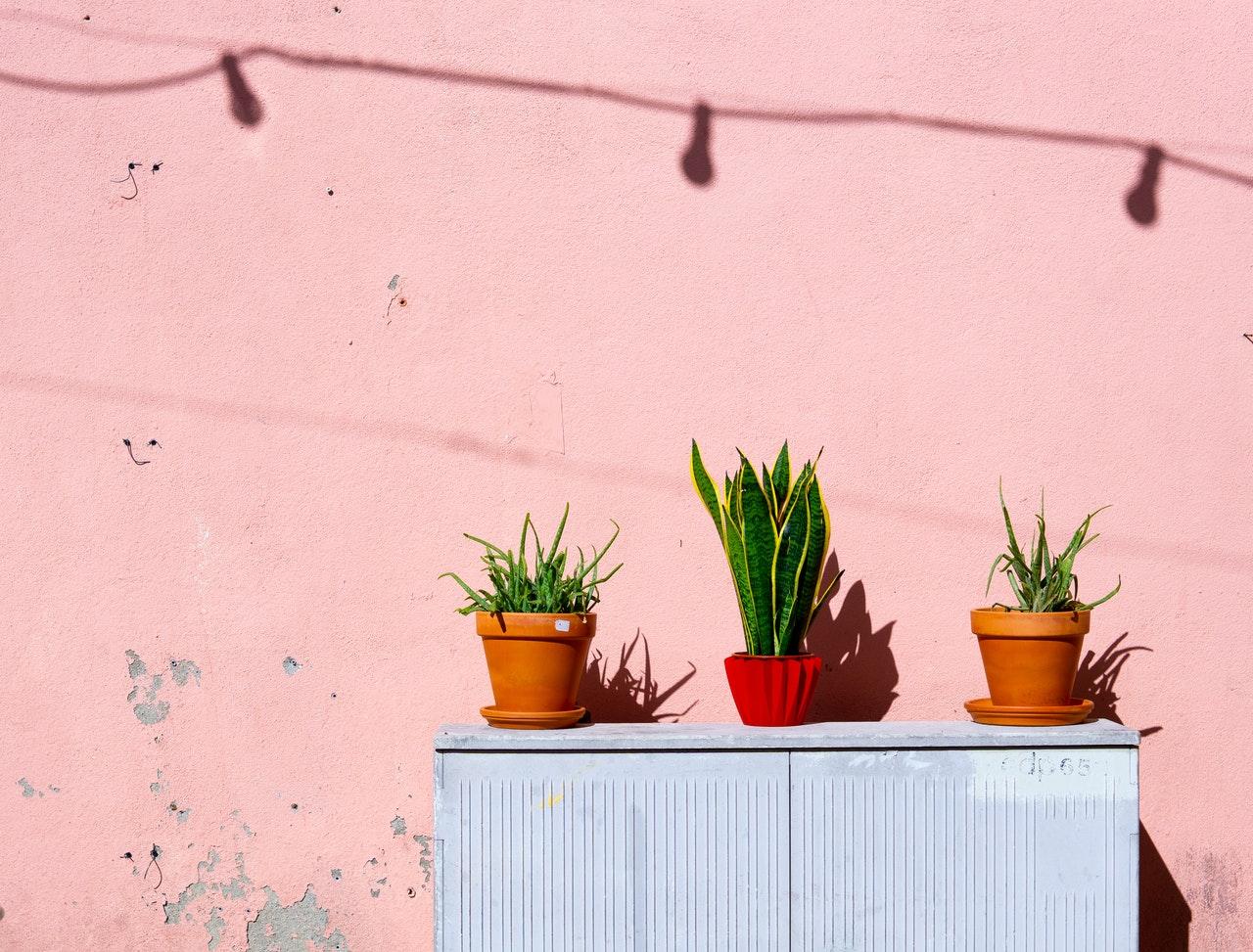 doniczki na kwiaty z tworzywa sztucznego