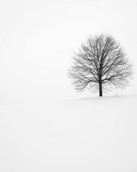 fototapeta drzewo zima